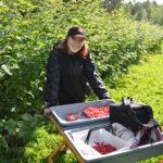 Сезонная работа по сбору ягод в Финляндии