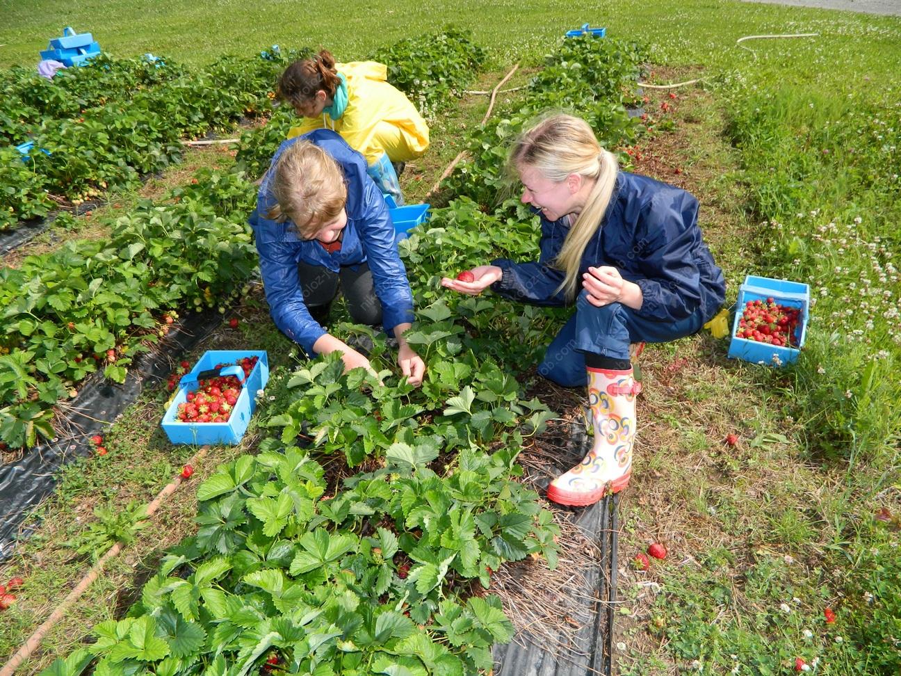 Заключение трудового договора допускается с лицами достигшими возрастана сезонную работу